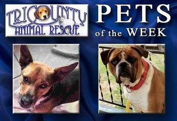 (L-R) Bullet and Cooper